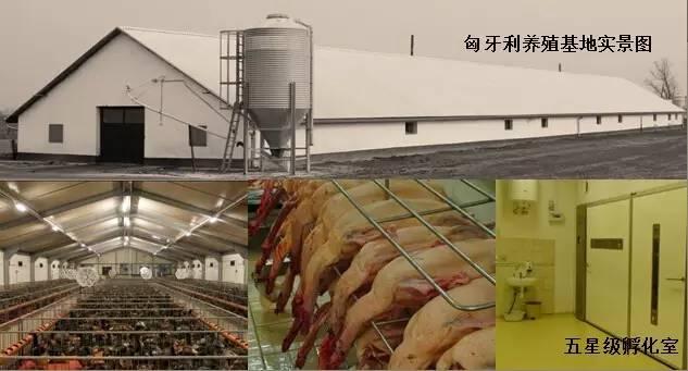 东方龙商务成功举办欧洲商品鹅养殖加工投资选址项目的政府对接会
