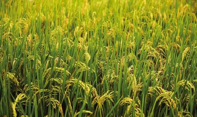 生态农业及农产品深加工基地投资选址项目