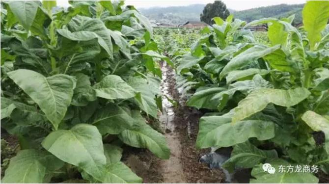 生物降解农业地膜投资选址项目