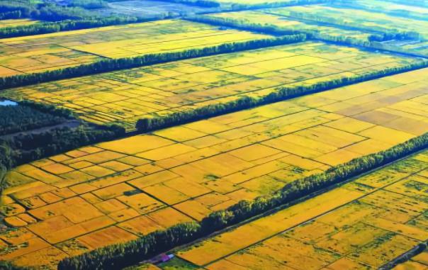 助力黑龙江绥滨县委托招商引资,改造提升传统产业,加快发展优势产业,实现产业优化提档,为县域经济崛起提供新动力