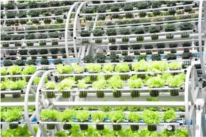 高科技农业园区全国布点投资选址项目