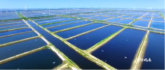 集团全力助推南通外向型农业综合开发区委托招商引资,打造现代化专业食品园区